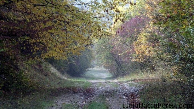 Hoia-Baciu, among the most haunted forests in the world