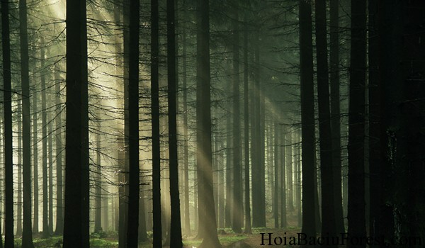 Hoia Baciu Forest Image Haunted UFO